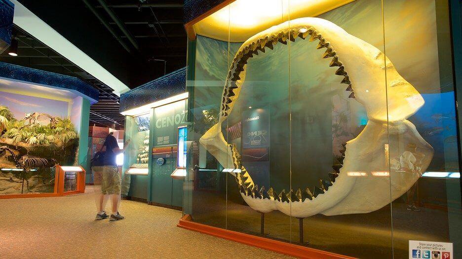 home south florida museum