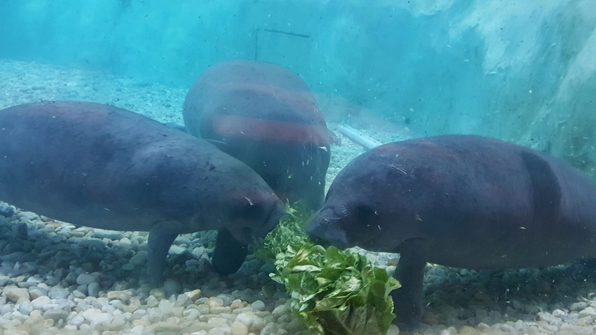 The Aquarium South Florida Museum