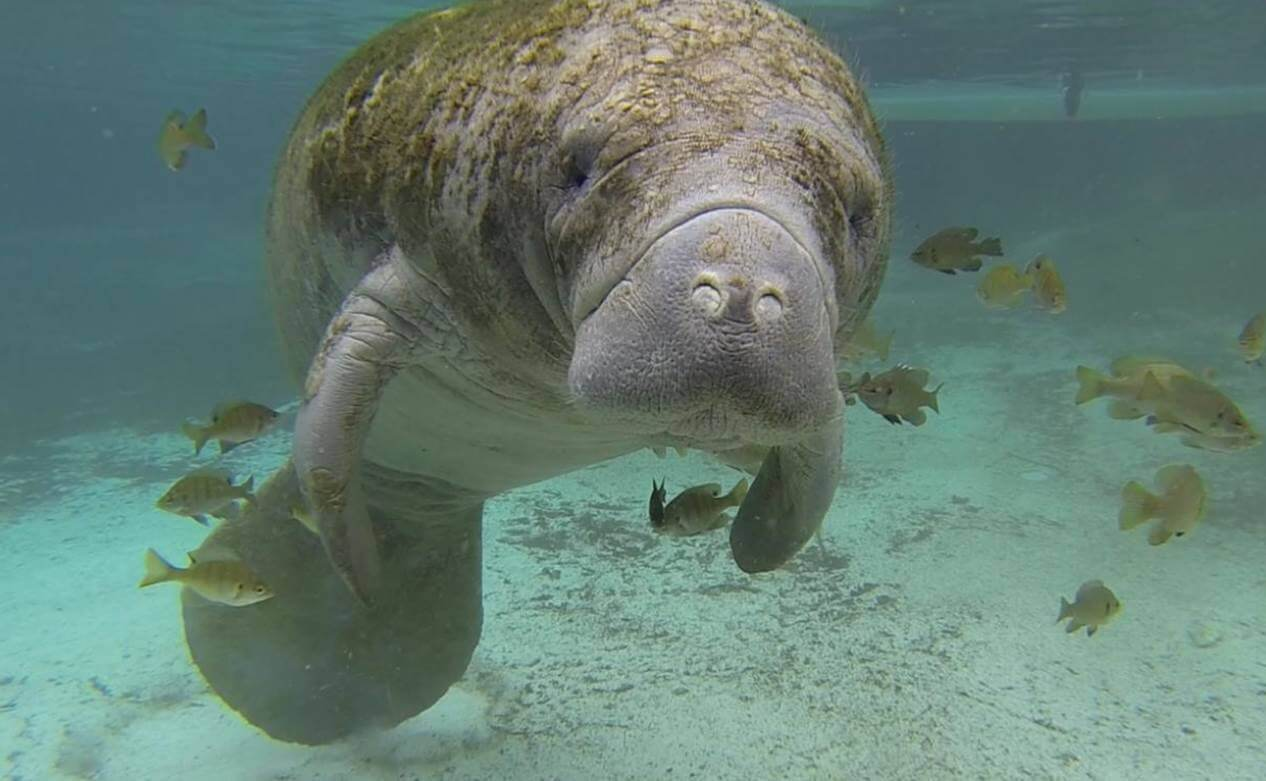 Science Sprouts: Manatee Mischief