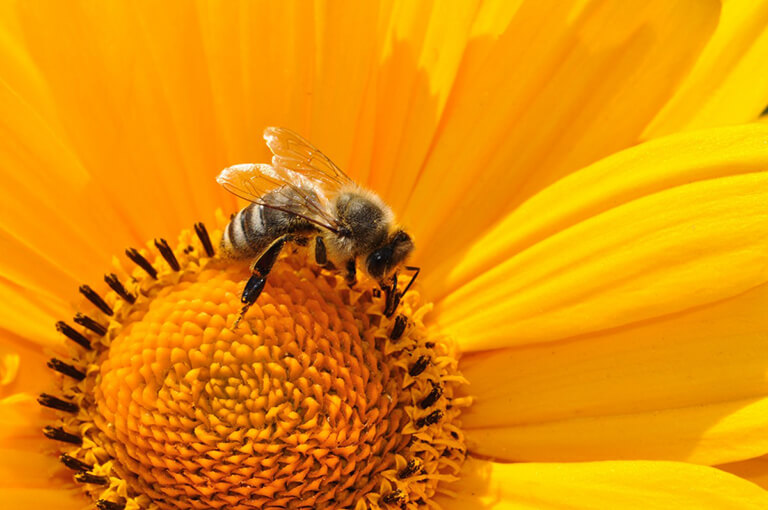 Science Sprouts: Beneficial Bees