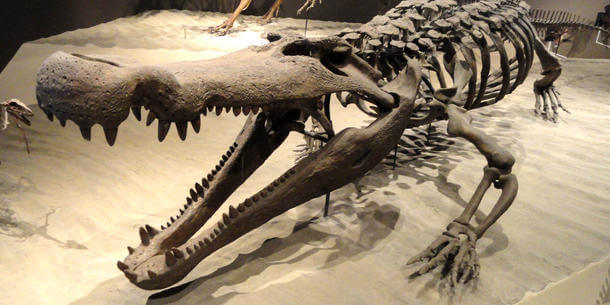 think + drink / science: Gigantic Crocodylians